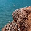 Der Lummenfelsen auf Helgoland