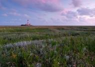 Der Leuchtturm von Westerhever inmitten der Salzwiesen