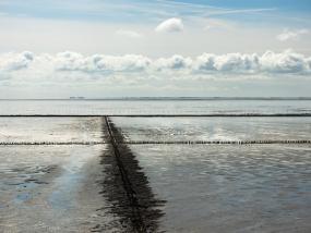 Landgewinnung an der Nordsee durch Buhnen und Lahnungen