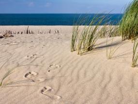 Fußspuren im Sand mit Strandhafer und dem Meer am Horizont
