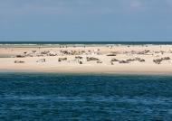 Seehundbank zwischen Sylt und Amrum